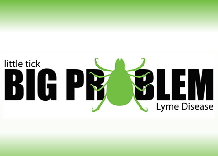 litte tick big problem