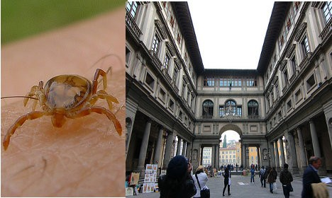 Ticks Infest Italian Art Gallery