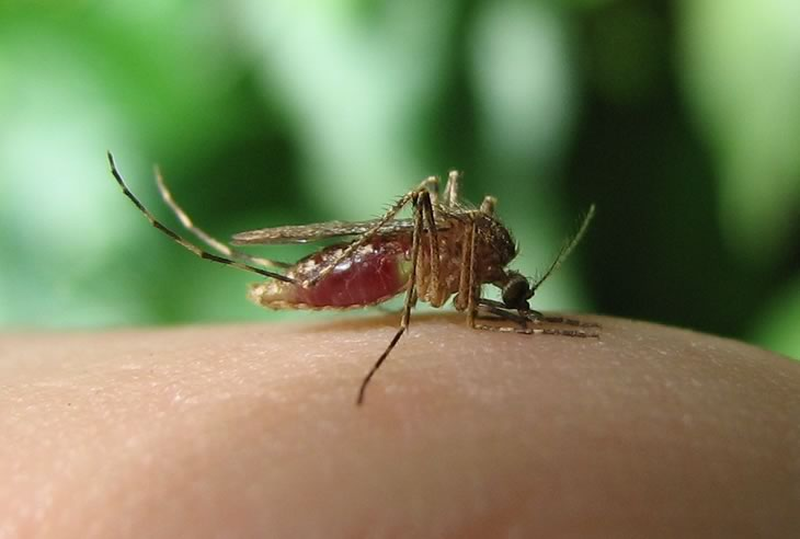 German study finds Lyme in mosquitoes