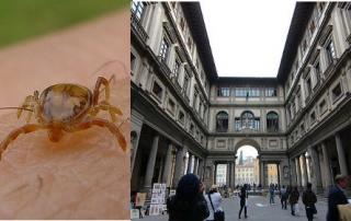 Ticks, Italy